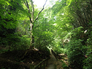 自然林保全事業